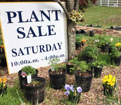 Plant Sale Saturday, Keswick, Cismont Virginia
